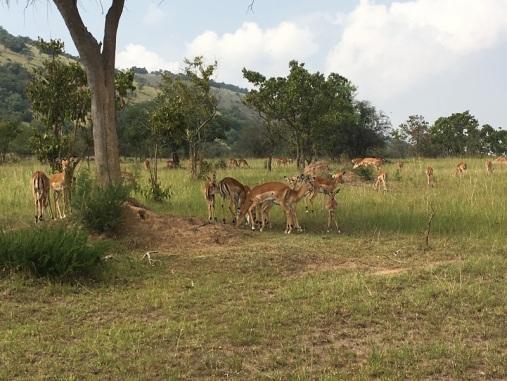 Rwanda 19b
