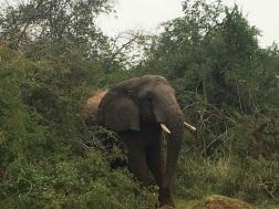 Rwanda 19d