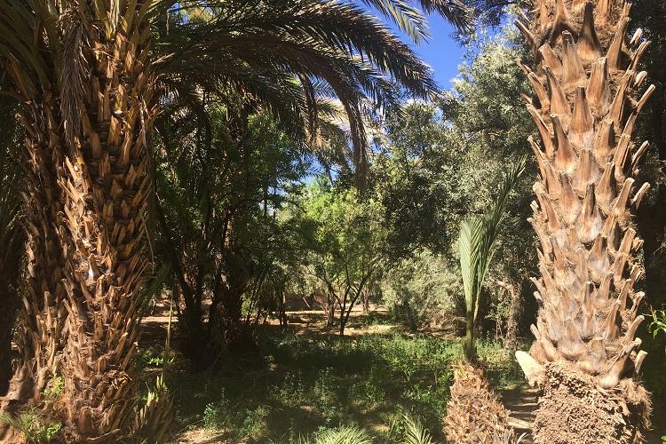 Maroc 12C