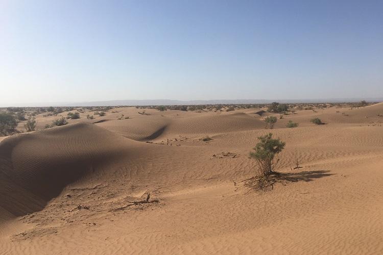 Maroc 13d
