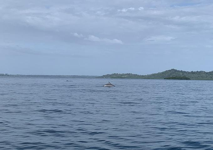 Panama 24